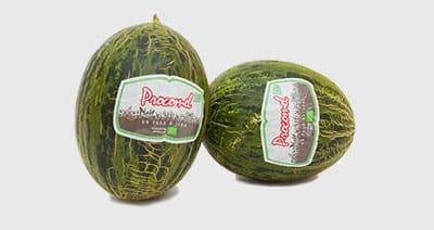 melon procomel bio