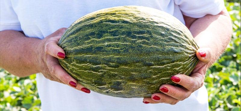 comment-choisir-un-bon-melon